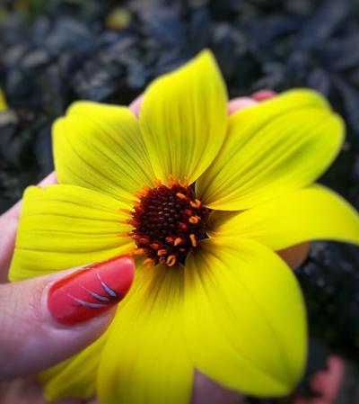 ongles fleur jaune